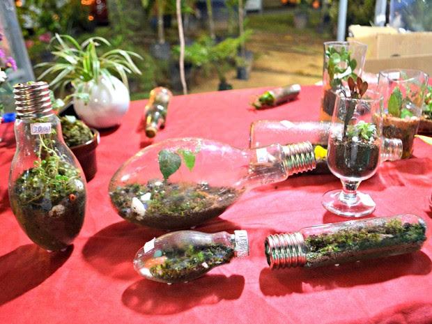 Para criar minijardins dentro de lâmpadas agrônoma leva 15 a 30 minutos (Foto: Quésia Melo/G1)
