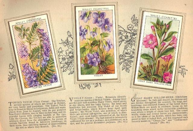 Flower Album6