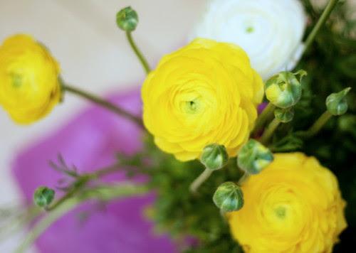 Ranunculus Gift