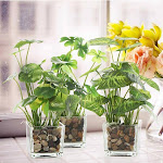 Set of 3 Faux Tabletop Plants in Glass Vases