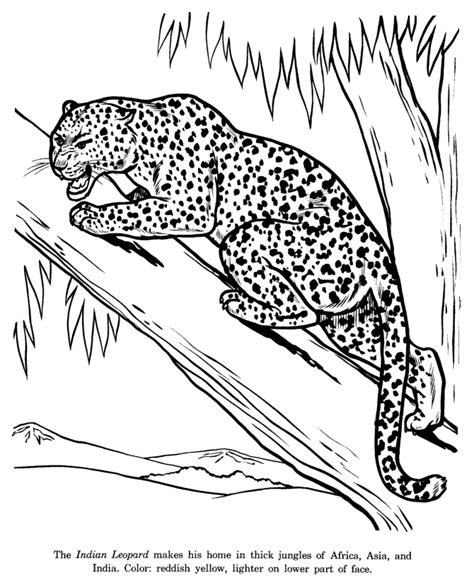 leopard pictures  print coloring home