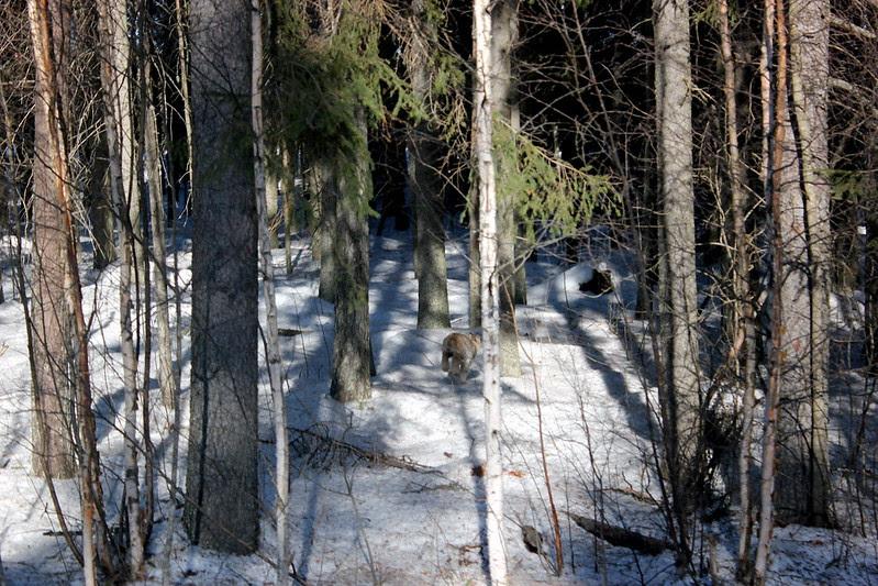 Savonlinna 2013 459