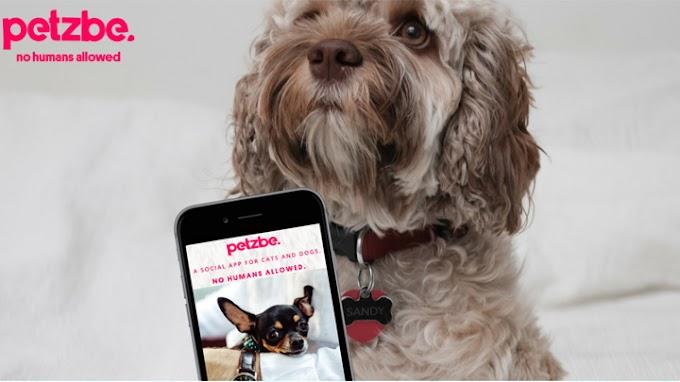 Petzbe, el Instagram solo para mascotas