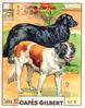 gilbert chiens008