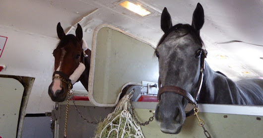 Air Horse One: This airline is strictly for the animals