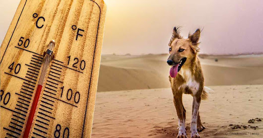 12 Signs of Overheating in Your Pet