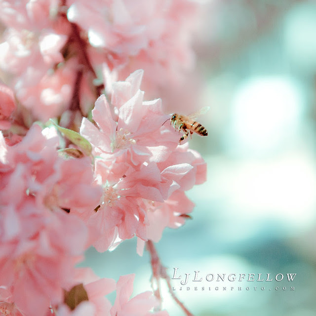 Spring Bee 35/365