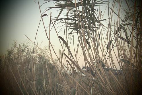 PB010345 2012年11月1日アートフィルター(デイドリーム