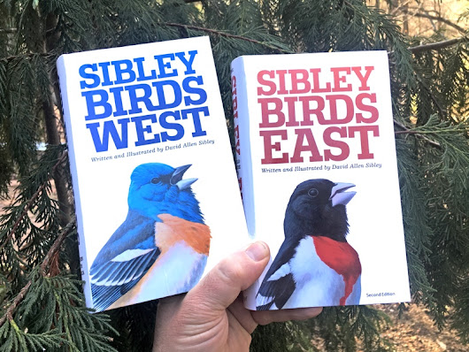 New! Revised Eastern and Western Field Guides - Sibley Guides