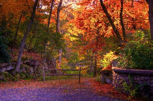 Fall foliage glory