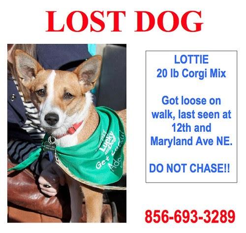 Corgi Dog Rescue Maryland