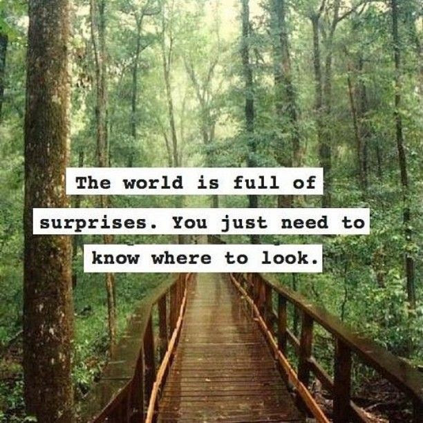 Quotes About Full Of Surprises 53 Quotes