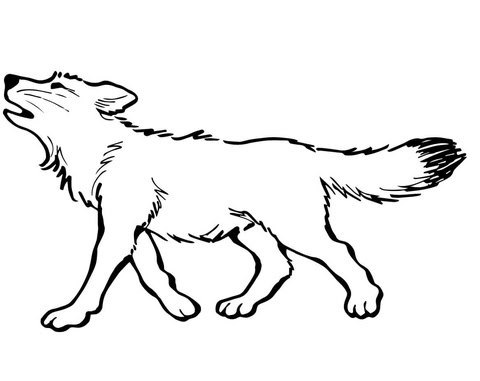 Baby Wolf coloring page | Free Printable Coloring Pages