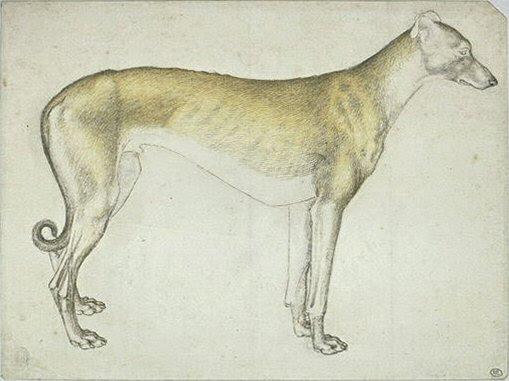 File:Pisanello - Codex Vallardi 2433.jpg