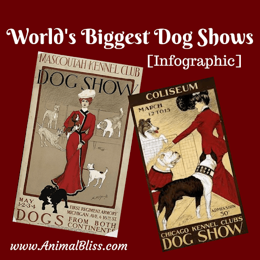 World's Biggest Dog Shows [Infographic] | Animal Bliss