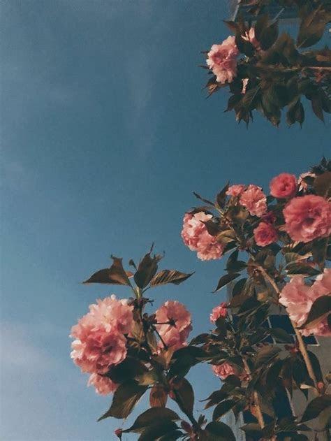 pink roses love   flower aesthetic aesthetic