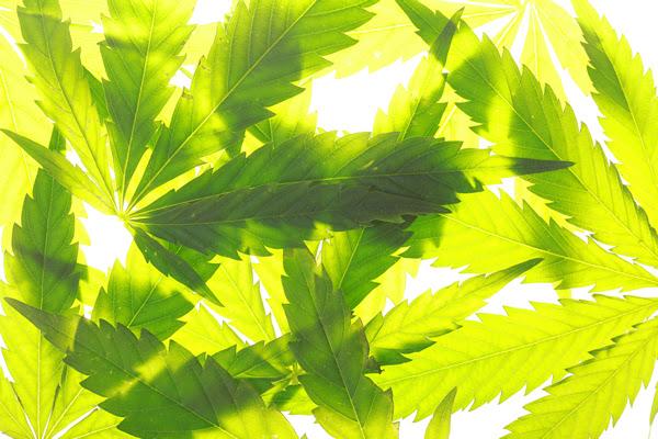 Cannabis Festival, gay news, Washington Blade