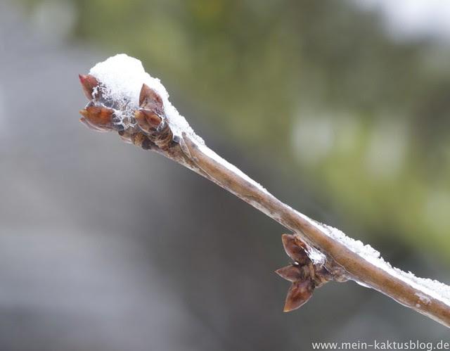 Ice on trees - macros /