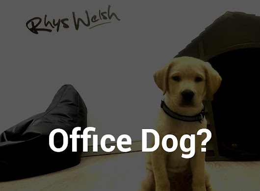 Web Design Cardiff - Reasons why an office dog can help build better websites!
