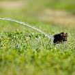 Sprinkler System Updates by Greentech Irrigation and Design Waco, TX