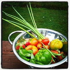 Today's little harvest of grape tomatoes, container tomatoes, green onion, basil, string beans and bell peppers. #containergarden #igrewit #deck #summer #salad #yumo #food #sodelicious #justpicked