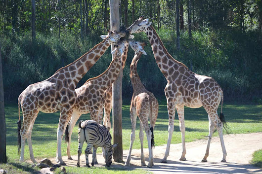 Visiting Australia Zoo With Young Children - Four Around The World