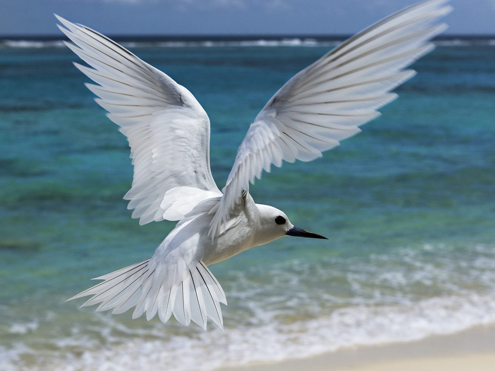 Seagull Flying On The Beach New HD Wallpapers All HD