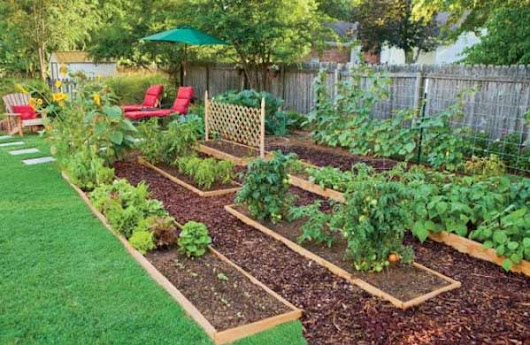 Why You Should Consider Using Edible Landscape | Home Gardening Tips