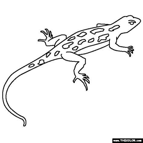 coloring book lizards lizard coloring page artanimal