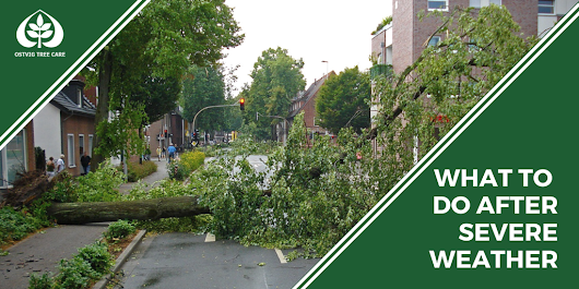 What To Do After Severe Weather - Ostvig Tree Care