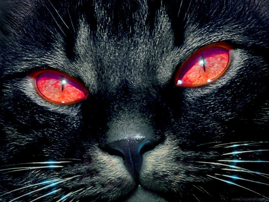 La supersticion de los gatos negros Gatos Negros, ¿mascotas del diablo?