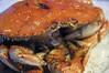 蟹パーティ, Crustacean, San Francisco