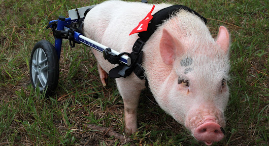 Watch now: Nature | My Bionic Pet | WGBY Video