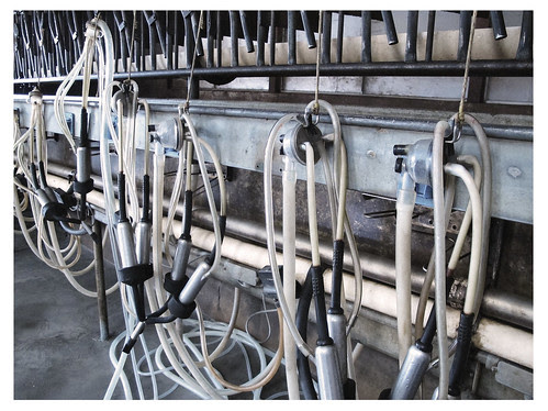 Milking Shed