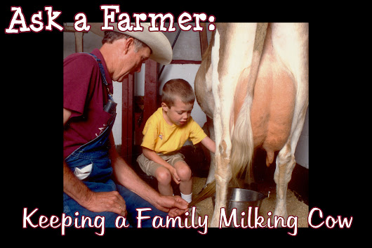 Ask a Farmer: Keeping a Family Milking Cow