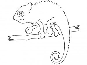 Iguana Para Colorear