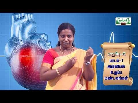 5th Science உறுப்பு மண்டலங்கள் அலகு 1 Kalvi TV