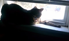Maggie loves a good sunny window