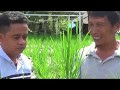 Petani Wajib Tau ! Cara Budidaya Tanaman Padi Menggunakan Sistem Hidroganik