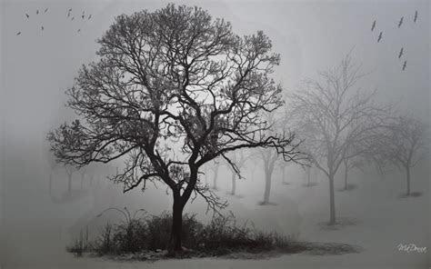 hd foggy fall morning wallpaper