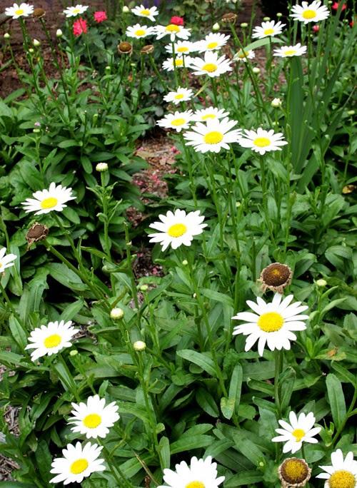 garden.right.8
