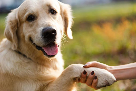Does Your Dog Struggle With Certain Types of Touch? Try These Handling Exercises