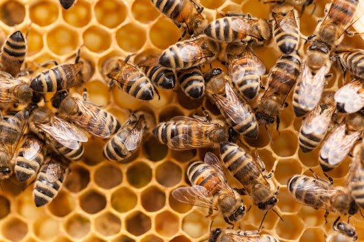 How to Keep Bees: A Beginner's Guide to Beekeeping