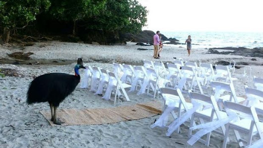 Buster busts in on far north Queensland beach wedding