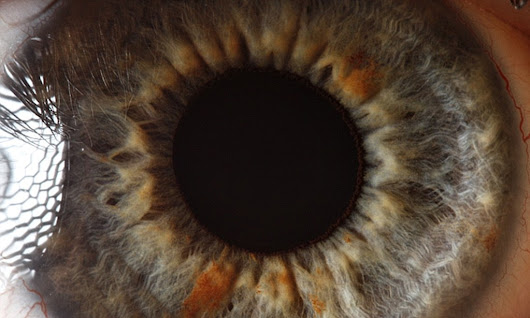 The eyes have it: The iris pictured in remarkable detail by incredible close-up shots