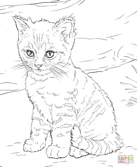 cute kitten super coloring