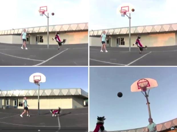 'Petey' consegue acertar a bola com precisão no cesto. (Foto: Reprodução/ABC News)