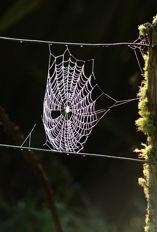 Spider Web: Early morning elegance