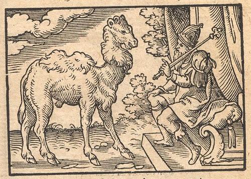 Camelus et Iuppiter - Osius