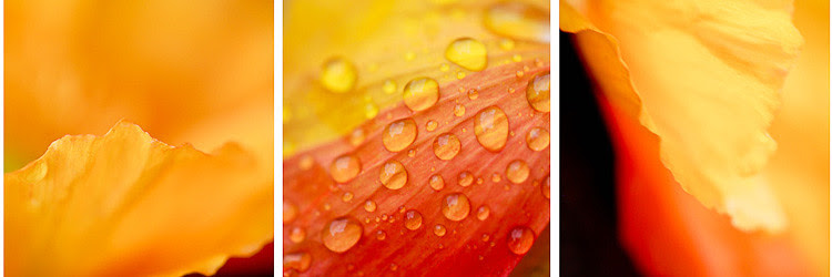 rain flower